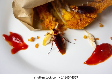 Cockroach are eating food (fried chicken) on a plate in the kitchen. It's makes them dirty and poor hygiene in the house. Cockroaches are carriers of the disease.