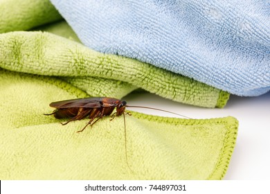 Cockroach on the fabric The danger of the insects that cause fabric damage.