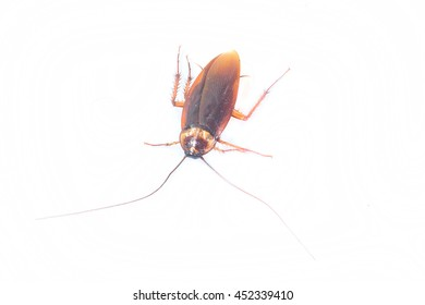 Similar Images Stock Photos Amp Vectors Of Insect Mosquito
