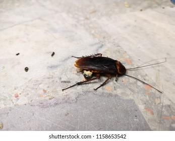 cockroach trample by human but it is not dead.