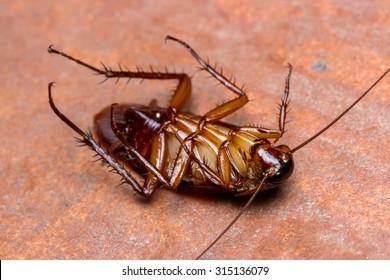 cockroach turn face up on floor.