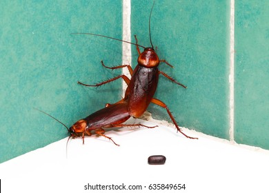 Cockroaches are breeding