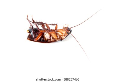 Cockroaches dead on white background