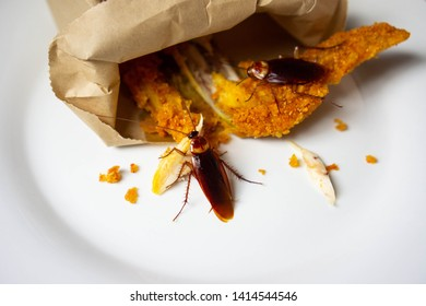 Cockroaches are eating food (fried chicken) on a plate in the kitchen. It's makes them dirty and poor hygiene in the house. Cockroaches are carriers of the disease.