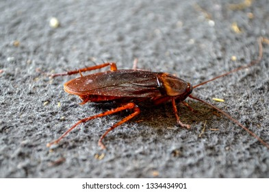 Household Insects Images, Stock Photos & Vectors | Shutterstock