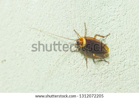 Are Springtails Nocturnal