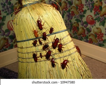Cockroaches on Broom