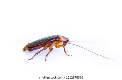 Cockroaches are on a completely separate white background.