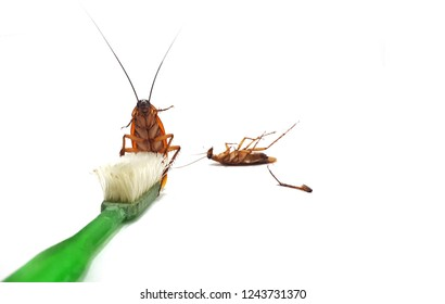 Cockroaches on dirty Toothbrush