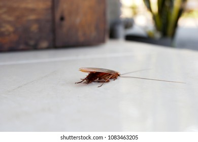 cockroaches on the floor