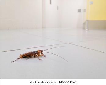Cockroaches on the public toilet floor