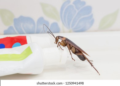 Cockroaches are on the toothpaste in the bathroom, and cockroaches also carry the germs to humans in the home should be equipped with a cockroach protection system.