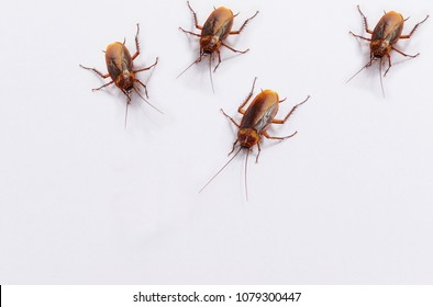 cockroaches are on white background.