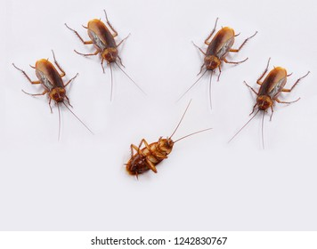 Cockroaches on white background.