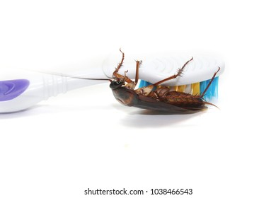 Cockroaches are trapped on the tip of the toothbrush, cockroaches are carriers of the disease.