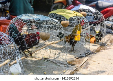 Cocks in cages at a cockfighting meeting, Meekong Delta, Vietnam