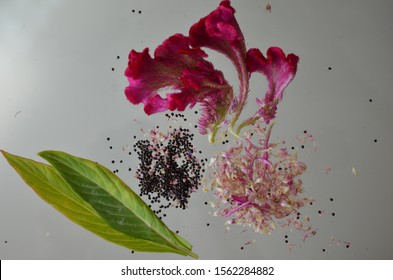 cockscomb flowers with leaves and seeds, celosia cristata