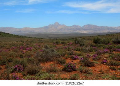 the Cockscomb mountains taken from typical Karoo landscape