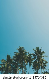 Cocnut palm trees on tropical beach, vintage film color stylized