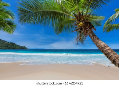Coco palm on Sunny tropical beach.  Summer vacation and tropical beach concept.