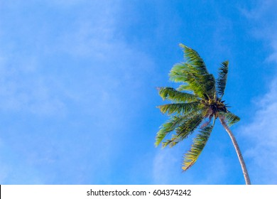 Coco palm tree on cloudy blue sky background. Sunny day on tropical island. Exotic wedding banner template. Green palm leaves. Coconut palms under sunlight. Optimistic summer nature backdrop photo