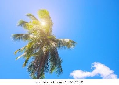 Coco palm tree top with sun flare. Palm tree crown with green leaf on sunny sky background. Tropical nature. Coco palm leaf. Palm leaf on blue sky. Summer travel photo banner template with text place