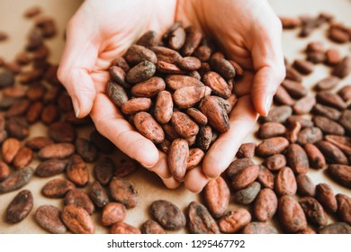 Cocoa beans in the hands of a girl. Aromatic cacao. Chocolate concept.