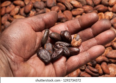 Cocoa beans in man's hand