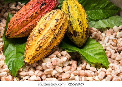 Cocoa beans and cocoa pod on a wooden surface.