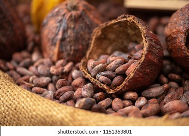 cocoa beans and cocoa pod pouring out into a burlap sack.