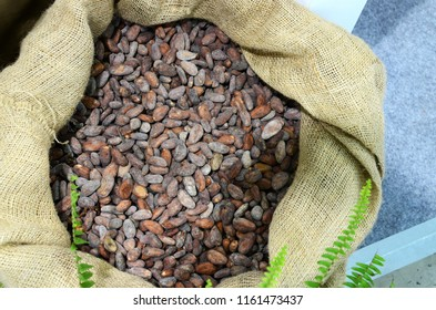 Cocoa beans in the sack