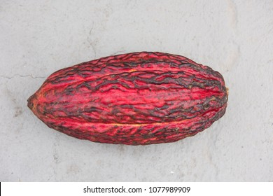 Cocoa fruit, source of all chocolate, in raw state.