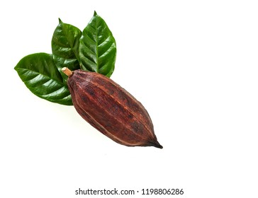 Cocoa pod with Cocoa leaf on a white background