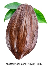 Cocoa pod with cocoa leaves isolated on a white background. Clipping path.