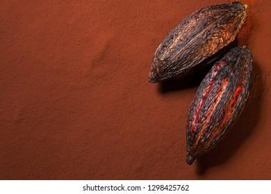 Cocoa pods on cocoa powder background