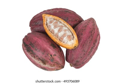 cocoa pods on white
