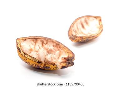 Cocoa pods on a white background.