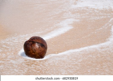 Coconut balls are on the beach. And a bubble of seawater surrounds.