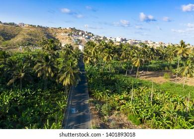 Coconut, banana, and sugar canne plantation near Achada Fazenda in Santiago Island  in Cape Verde - Cabo Verde