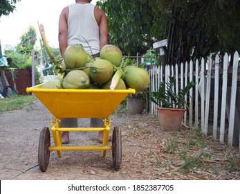 The coconut was in the cart with the man pulling.