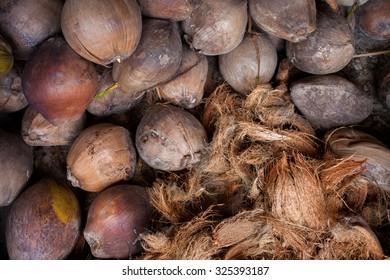 Coconut Coir - Coconut