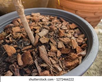Coconut coir on soil
