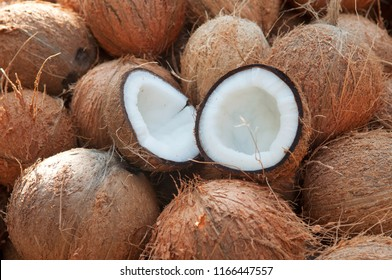 Coconut cut in half and whole coconuts in organic farm. A lot or heap of fresh tasty coco in Kerala India dried in sun to make oil from copra. member of Arecaceae palm family. charcoal and coir. drupe