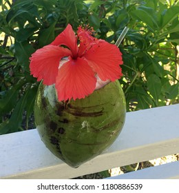 Coconut drink adorned with red hibiscus flower