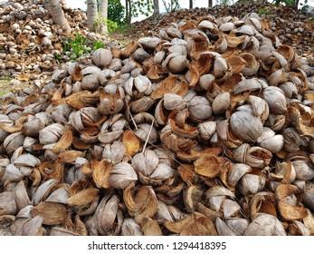 Coconut fiber, Coir