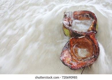 A coconut filled with water at the beach.