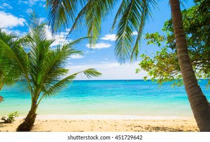 Coconut Getaway Exotic Paradise