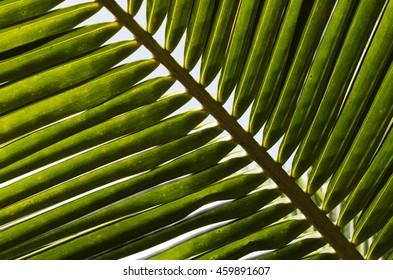 Coconut green leaf pattern backgrounds