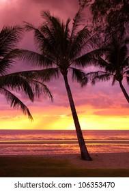 Coconut Horizon Night is Coming
