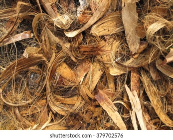 Coconut husks with which to prepare coir rope